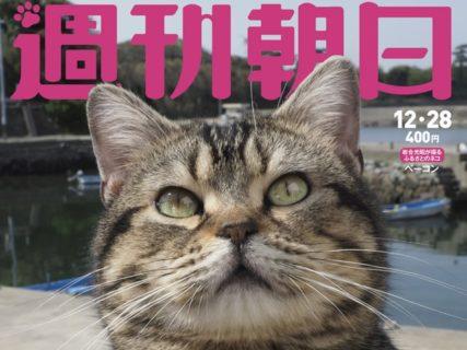 週刊朝日が2年連続で「猫特集」を刊行!表紙の撮影は今年も岩合さんなのニャ