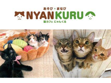 譲渡型の猫カフェ「にゃんくる」東海地区初となる新店舗を名古屋にオープン