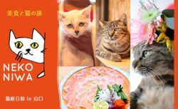 JALパックで行く猫旅館への旅「猫庭日和ツアー」が登場!1名から参加OKニャ