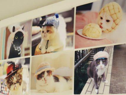今回のテーマは猫の寝顔!猫グッズブランド「ねこにすと」の企画展第3弾が札幌で開催