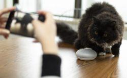 シャッターチャンスを逃さニャい!音声操作で猫の気を引くアプリ「ねこまねき」