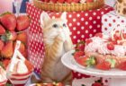 猫と苺がコラボした異色のデザートフェア「ストロベリーCATS コレクション」