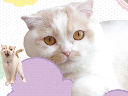 ちくわ柄の人気猫・ホイップの単独展「まるごとホイちゃん展」が1/16から大阪で開催