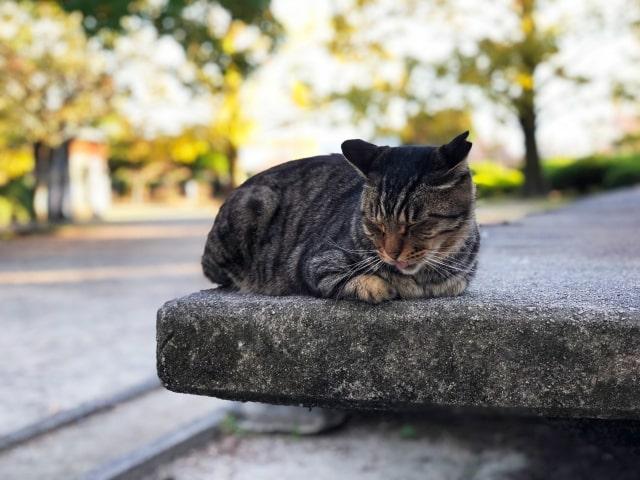 目をつむりながら耳をそばだてる猫