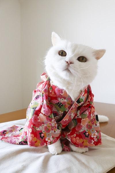 着物を着た白猫 by joe