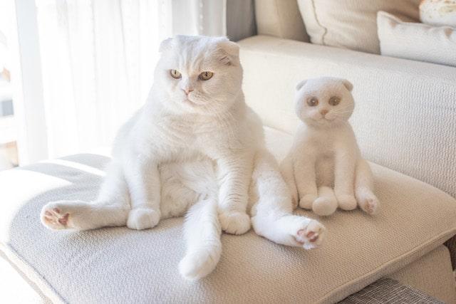 スコ座りする白猫 by rojiman