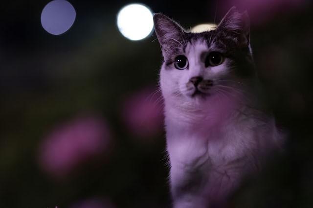 目を丸めてじっと遠くを見据える猫 by punkuma