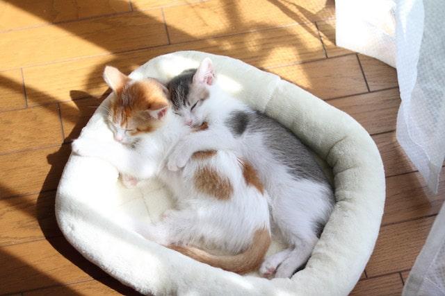 寄り添い合って眠る仲良しの2匹の猫 by Riepoyonn