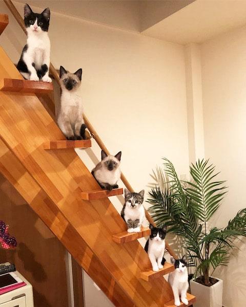 1段ずつ階段に並んで座る6匹の猫 by MaiYamamoto