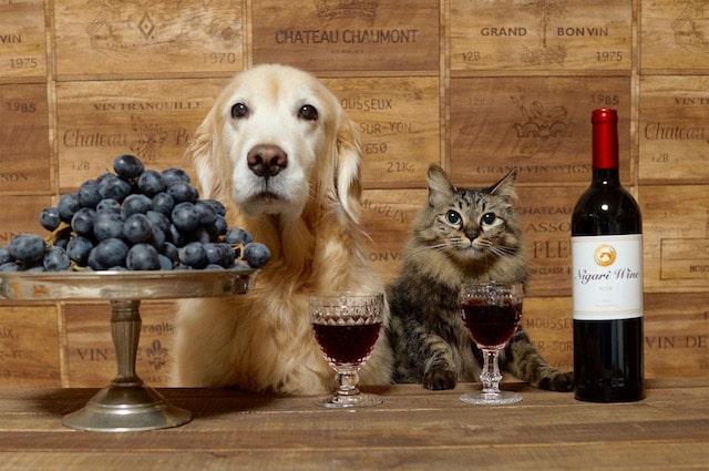 ワインを前に座る犬と猫 by わさびちゃんち