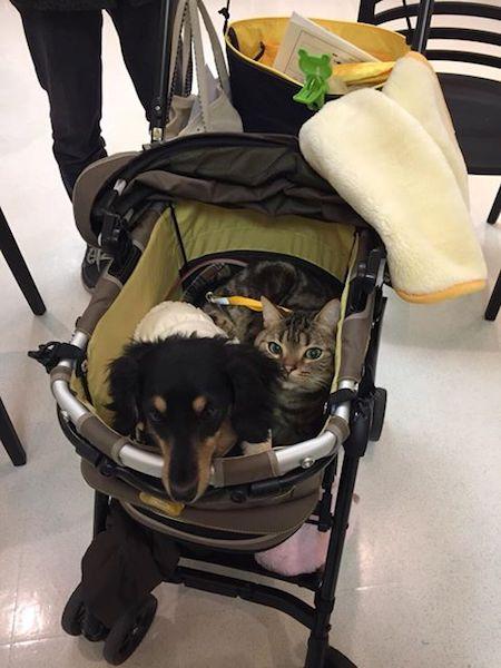 「にゃんこまつり」に訪れた犬猫