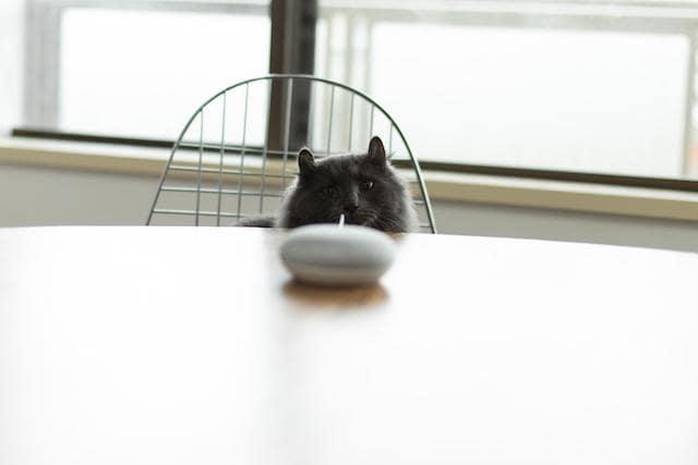 グーグルホームを見つめる猫