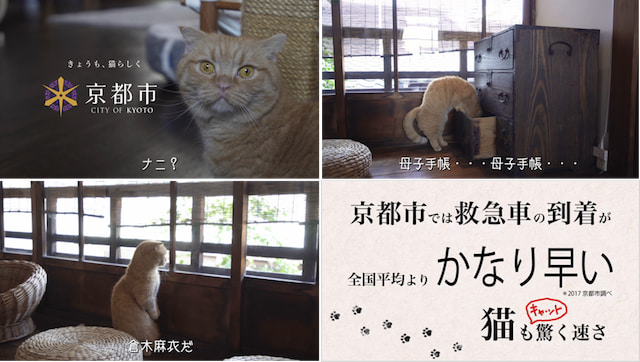 京都市の魅力をPRするため演技する猫のみゃーこ