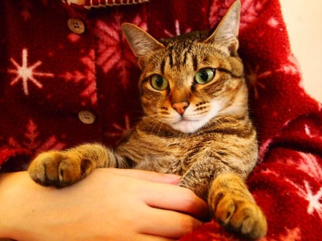 飼い主さんに抱かれている猫のイメージ写真