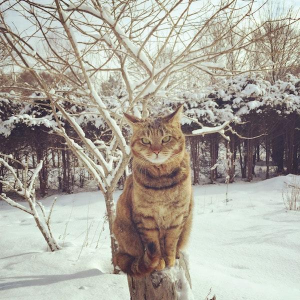 北海道のの自然で暮らす猫の写真 by 「もも と みらい」