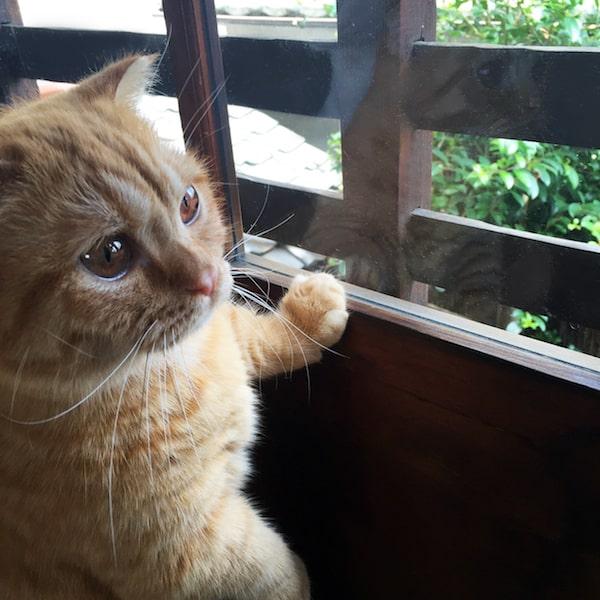 キャットアパートメントコーヒーの看板猫「ウニ」