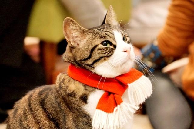猫カフェにいる猫のイメージ写真