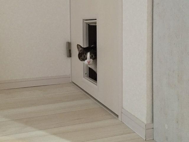 ひょっこりはんのような、ひょっこり猫のイメージ写真