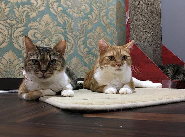 ネコリパブリック中野店の保護猫