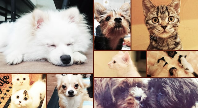 アニマルミーティングルームADOPT八王子店の犬猫たち
