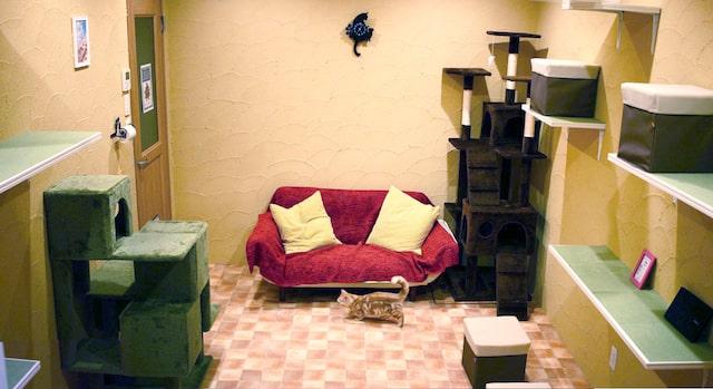 アニマルミーティングルームADOPT八王子店の「ねこ部屋」