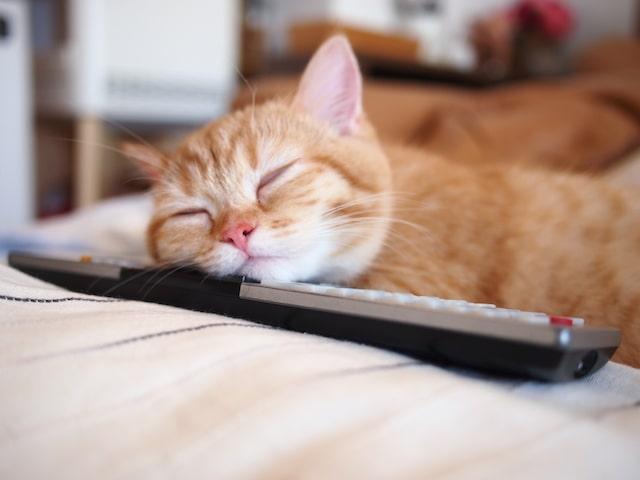 リモコンを枕にしてねる猫の寝姿 by @purin_kitty プリン