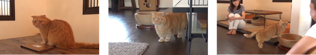 キャットアパートメントコーヒーで撮影された京都市のPR動画「きょうの,みゃーこ」のワンシーン