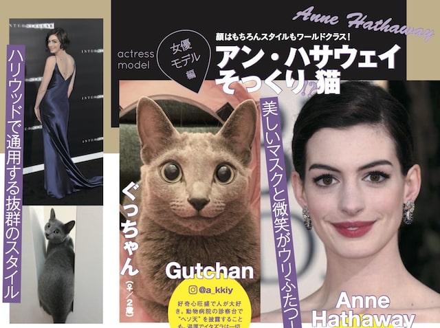 アン・ハサウェイに似ている猫