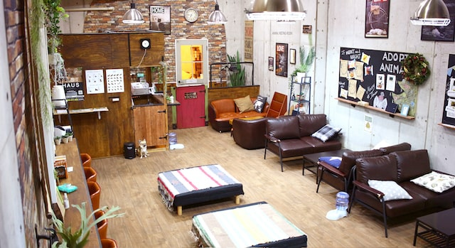 アニマルミーティングルームADOPT八王子店の「いぬ部屋」