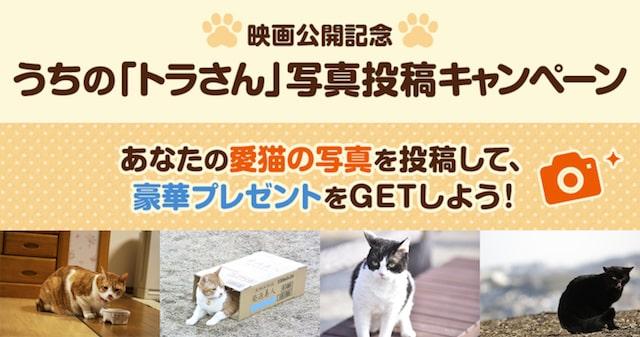 映画「トラさん~僕が猫になったワケ~」の写真投稿キャンペーン