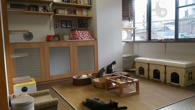 人形町の保護猫カフェ「たまゆら」の店内イメージ