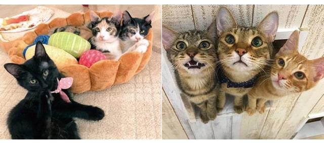 店内にいる猫たちのイメージ写真 by 猫カフェにゃんくる mozoワンダーシティ店