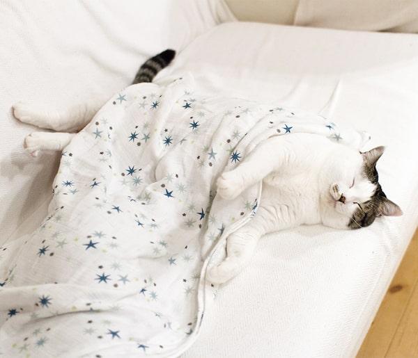 人間のお布団で気持ちよさそうに眠る猫のマイロ by「ハルタとマイロ 男の子と猫はいつも仲よし」