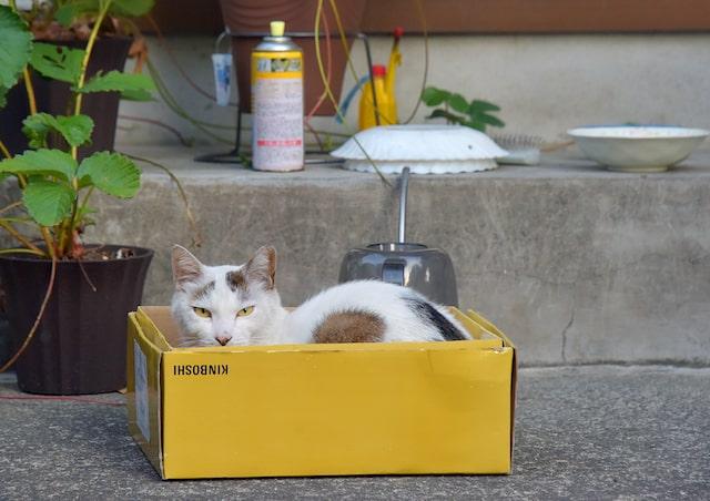黄色い箱に入った猫の写真 by kiyochan