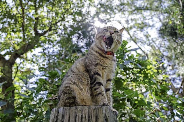 口を大きく空けて舌なめずりをする猫の写真 by punkuma