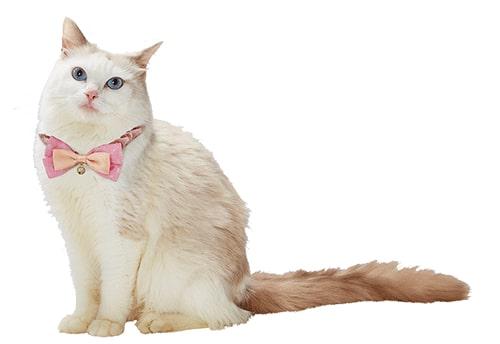 キャラペティのペット用グッズ「キャットカラーシュシュ(セーラーちびムーン)」を猫に着用したイメージ