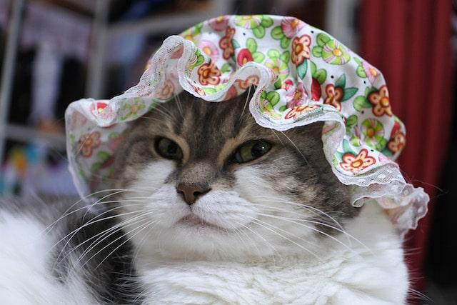 貴婦人のような帽子!?をかぶった猫の写真 by sanchelove