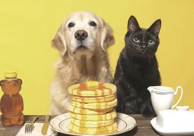 ホットケーキの前で座る犬と黒猫 by わさびちゃんち