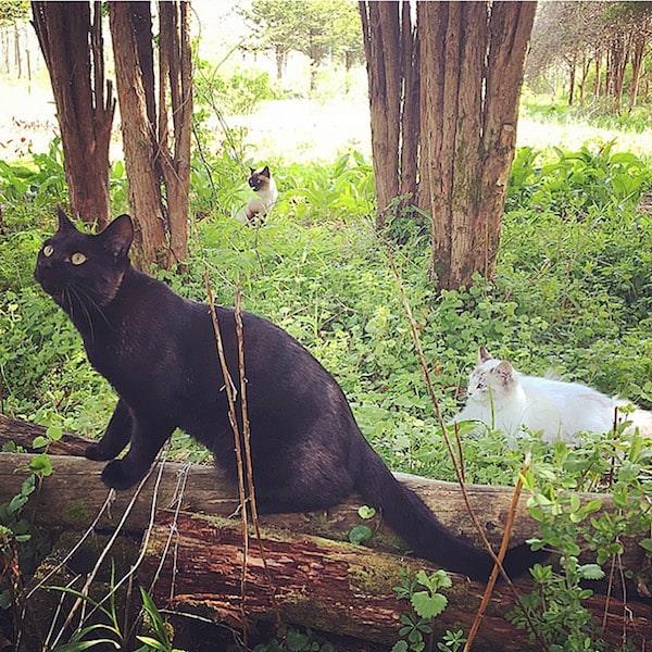 北海道の自然の中で遊ぶ猫の写真 by ももとみらい