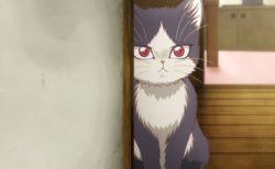 作家と猫の家族物語「同居人はひざ、時々、頭のうえ。」1/9からアニメ放送開始