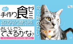 獣医師による愛猫のための手作りご飯セミナー、2月9日&13日に東京で開催