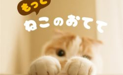 一冊まるごと猫の手を収録!マニアックな写真集「もっと ねこのおてて」
