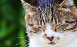 西東京市が「うちの愛猫自慢フォトコンテスト」の写真作品を募集中