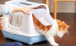マサイ族のような猫がデザイン♪ お洒落な猫用トイレ「トレンディキャット マサイ」