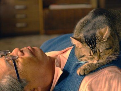 撮影に35匹の猫が参加!映画「ねことじいちゃん」から猫だらけの特別映像が公開