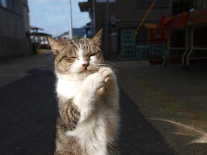 岩合光昭写真展 ほっこりネコー「やきものの里のネコ」より- しもだて美術館