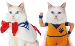 愛猫がセーラームーンや孫悟空に変身できるペット用品ブランド「キャラペティ」