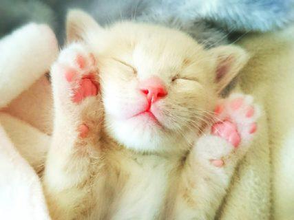 猫の寝顔に癒やされる!4回目となる「ねこにすと展」が名古屋で開催