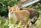 宮古島の犬猫を救いたい、宮古島アニマルレスキューチームがシェルター建設費の支援を募集中