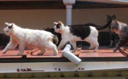2月はニャンと猫&ネコ科動物の番組を毎日放送!アニマルプラネットの猫の日企画